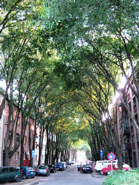 ▲ 거대한 나무에 둘러싸인 노비사드의 거리 풍경.