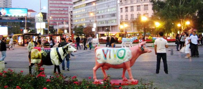 ▲ 베오그라드 시내엔 소를 형상화한 조형물이 많다.