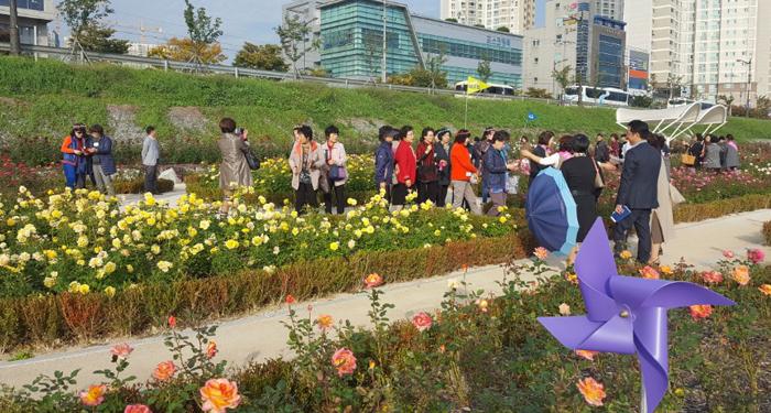 ▲ 형산강 장미원에서 열린 포항 그린웨이 아카데미에 참가한 교육생들이 강변에 조성된 장미를 보며 즐거워하고 있다.                                 /포항시 제공