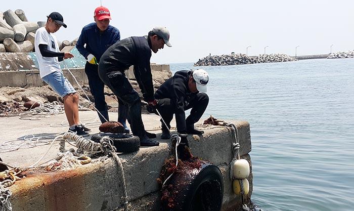 ▲ 포스코클린오션봉사단원들이 포항 해안가에서 정화활동을 하고 있다.