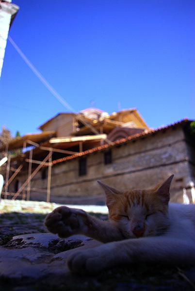 ▲ 오흐리드에선 고양이도 평화로운 낮잠을 즐긴다.