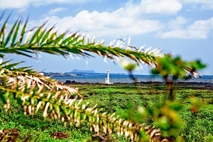 ▲ 바다와 푸른 들판이 아름다운 조화를 이룬 제주의 풍광.